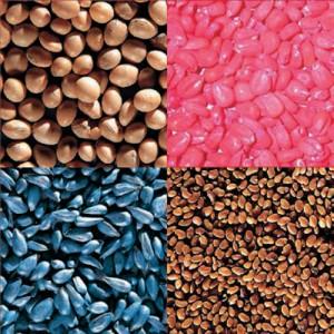 procase-semillas-compania